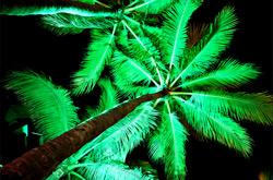 illuminazione alberi con proiettori led